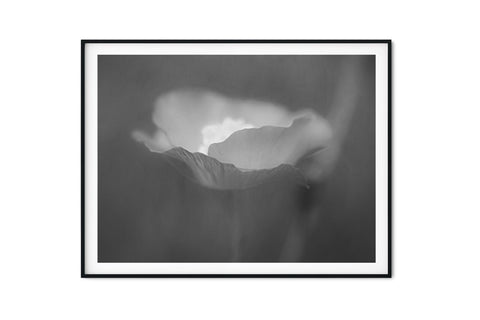 Pink Poppy Floral Wall Art - Giclée Art Print in Black and White