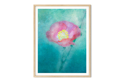 Pink Poppy #2 Floral Watercolor Wall Art - Giclée Art Print