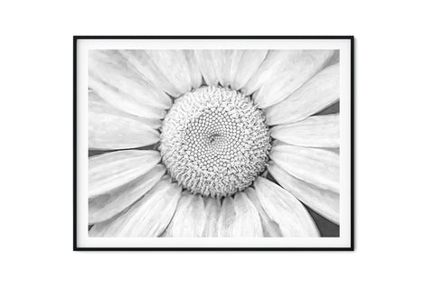 Cosmic Daisy Wall Art - Giclée Art Print in Black and White