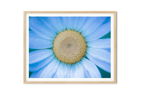Cosmic Daisy Wall Art - Giclée Art Print