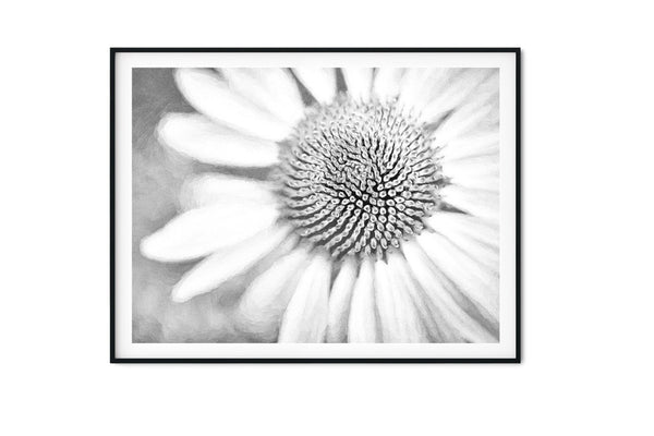 Echinacea Purple Coneflower Wall Art - Giclée Art Print in Black and White