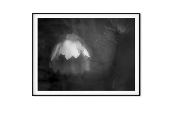 White Cosmo After Rain Floral Wall Art - Giclée Art Print in Black and White