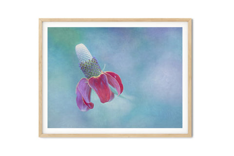 Mexican Hat Flower Wall Art - Giclée Art Print