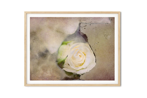 White Rosebud Watercolor Floral Wall Art - Giclée Art Print
