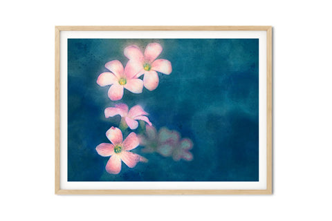 Purple Oxalis Shamrock Blooms Watercolor Wall Art - Giclée Art Print