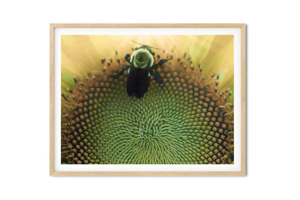 Bumblebee Heaven Wall Art - Giclée Art Print