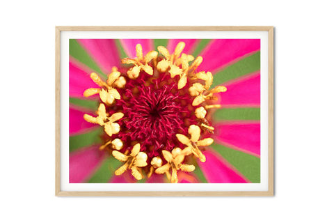 Ferris Wheel Zinnia Wall Art - Giclée Art Print