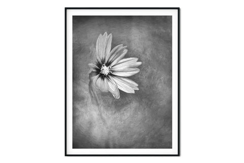 Pretty in Pink Cosmo Floral Wall Art - Giclée Art Print in Black and White