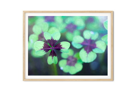 Iron Cross Oxalis Shamrock Wall Art - Giclée Art Print