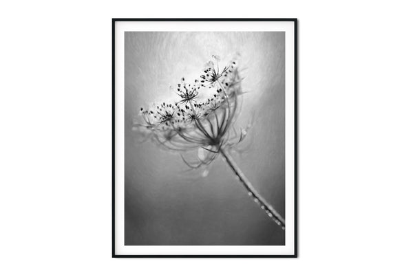 Queen Annes Lace Floral Wall Art - Giclée Fine Art Print in Black and White