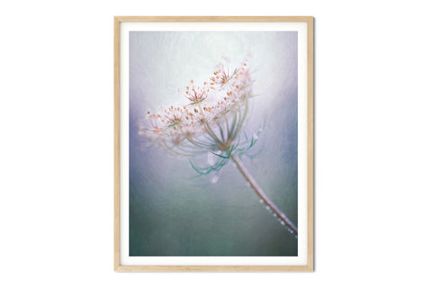 Queen Annes Lace Floral Wall Art - Giclée Fine Art Print