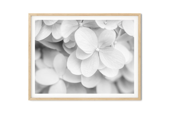Hydrangea in Blue Wall Art - Giclée Fine Art Print in Black and White
