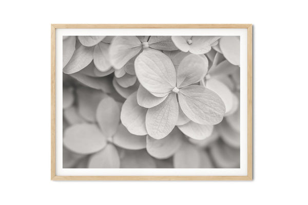 Hydrangea in Blue Vintage Wall Art - Giclée Fine Art Print
