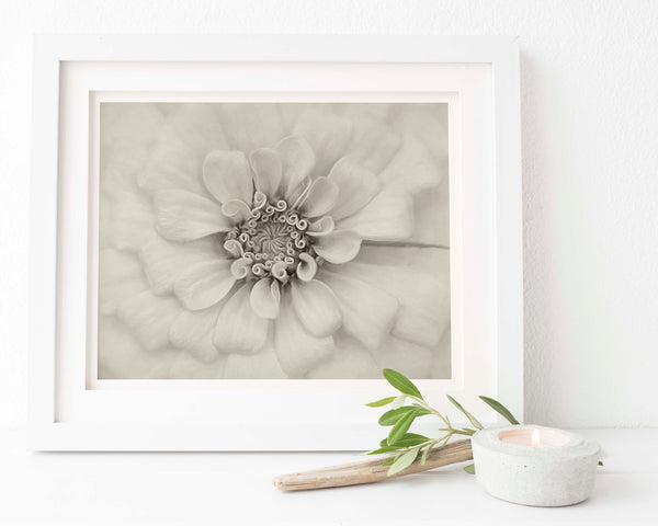 Antique White Bridal Zinnia Vintage Wall Art | Giclée Art Print