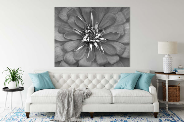 Pink Explosion Zinnia Wall Art | Giclée Art Print in Black and White
