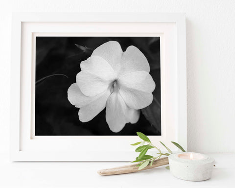White Impatien Floral Wall Art | Giclée Art Print in Black and White