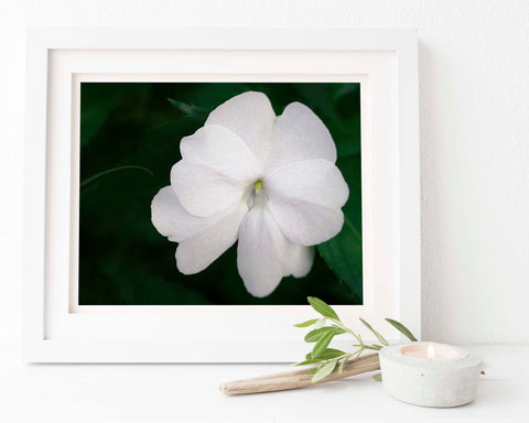 White Impatien Floral Wall Art | Giclée Art Print