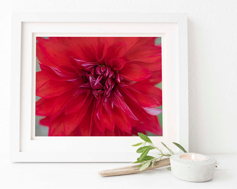 Red Dahlia Floral Wall Art | Giclée Art Print