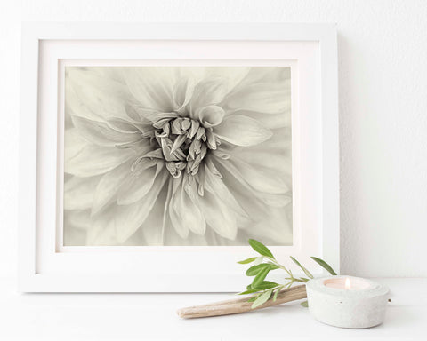 Antique Style Red Dahlia Floral Wall Art | Giclée Art Print in Sepia