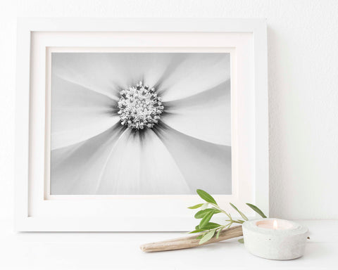 Star of the Show Lavender Cosmo | Floral Wall Art | Giclée Art Print in Black and White