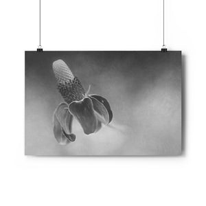 Mexican Hat Flower Wall Art - Giclée Art Print in Black and White