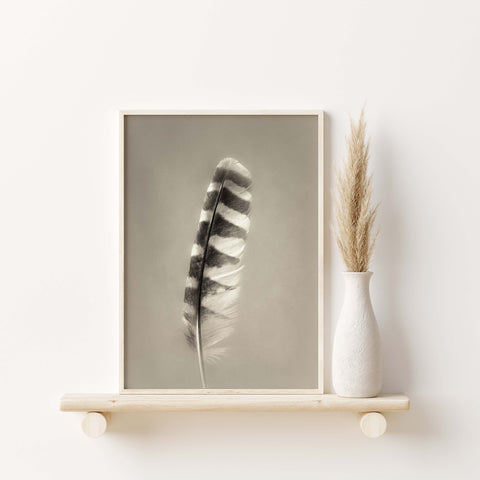 Barred Owl Feather Wall Art  - Giclée Art Print in Vintage Sepia