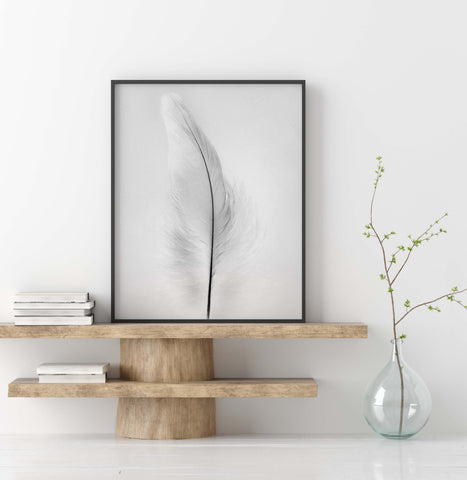 Grey Macaw Parrot Feather Down | Feather Wall Art  - Giclée Art Print in Black and White