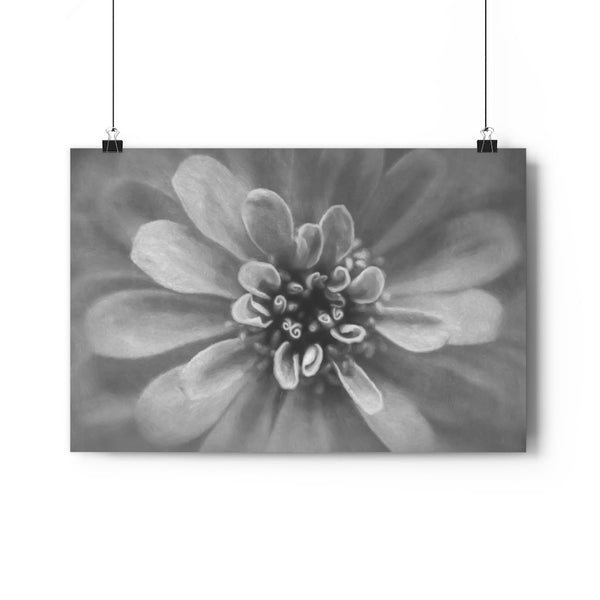 Precious Pink Zinnia Floral Fine Art Giclée Print in Black and White - Dream in Color Wall Art