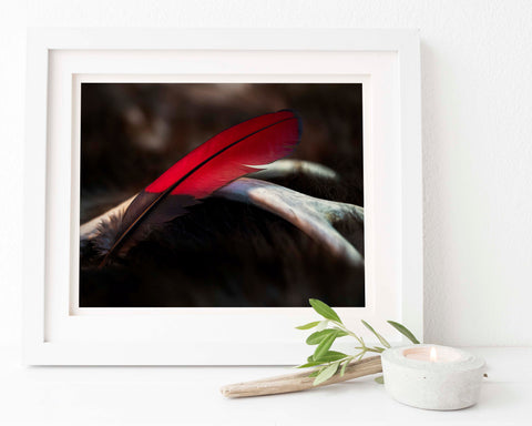 Feather Print | Red Turaco Feather | Feather Wall Art | Giclée Art Print