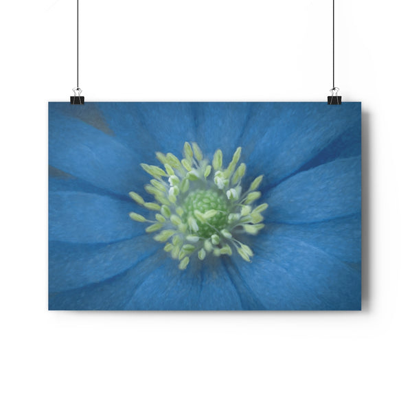 Blue Grecian Windflower Floral Wall Art - Giclée Art Print