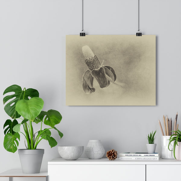 Mexican Hat Flower Vintage Wall Art - Giclée Art Print
