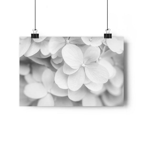 Hydrangea in Blue Fine Art Giclée Print in Black and White - Dream in Color Wall Art