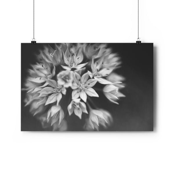 Graceful Allium Vintage Wall Art - Giclée Art Print in Black and White