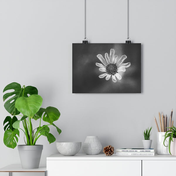 Baby Pink Zinnia Wall Art | Giclée Art Print in Black and White