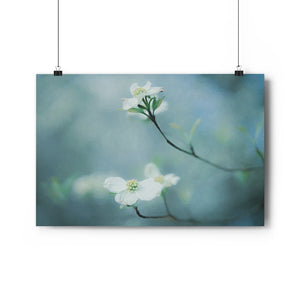 Dogwood Blooms Wall Art - Giclée Art Print