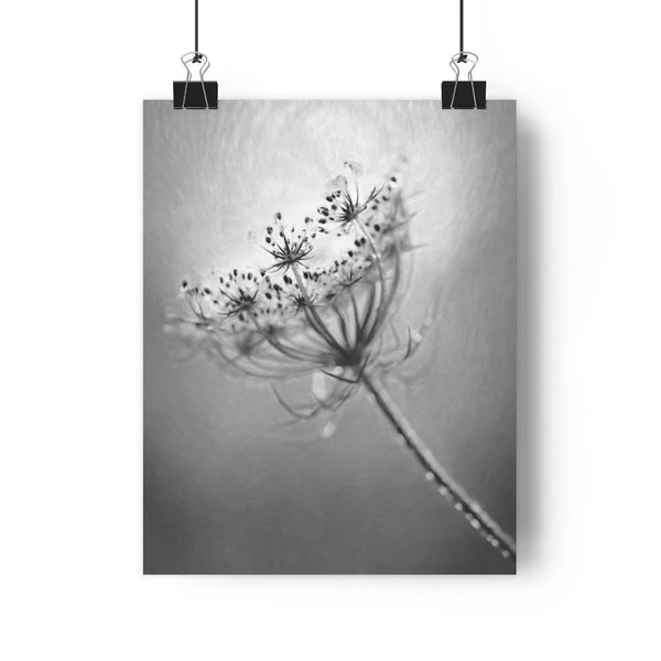 Queen Annes Lace Floral Fine Art Giclée Print in Black and White - Dream in Color Wall Art