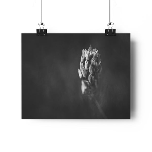 Lavender Meadow Flower Wall Art | Giclée Art Print in Black and White