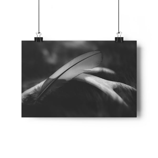 Feather Print | Red Turaco Feather | Feather Wall Art | Giclée Art Print in Black and White