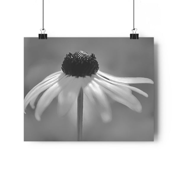 Dancing Brown Eyed Susan Fine Art Giclée Print in Black and White - Dream in Color Wall Art