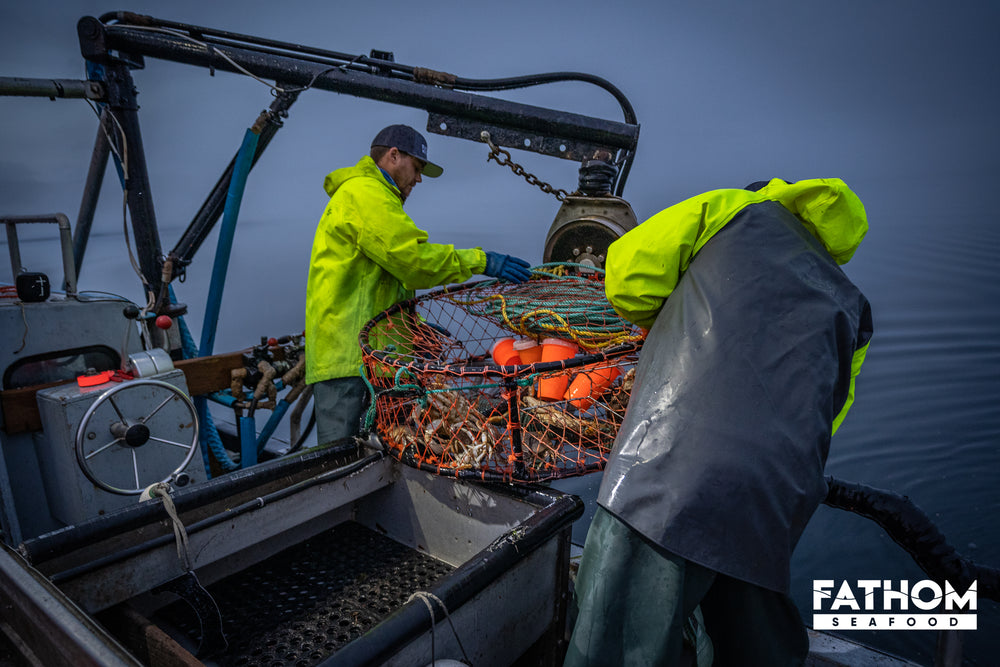 How are Dungeness Crab caught?