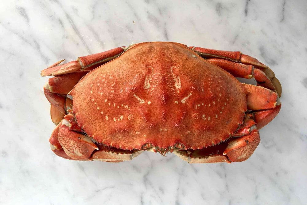 How to Cook Live Dungeness Crab: Step by Step