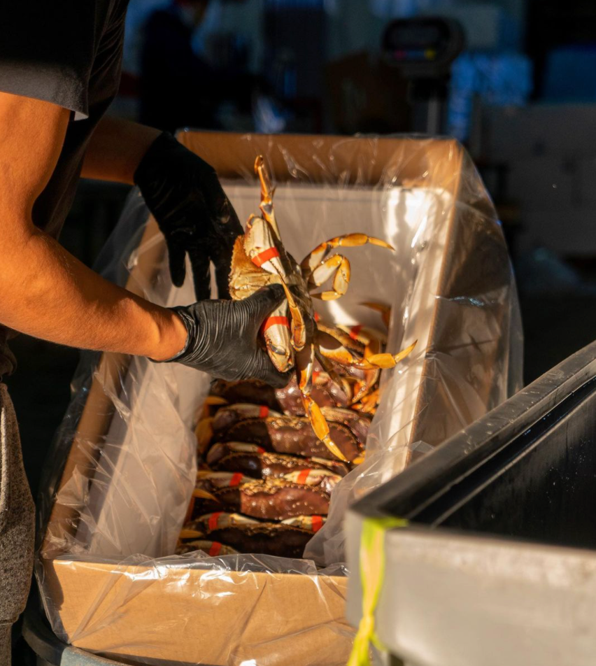 When is Dungeness Crab Season?