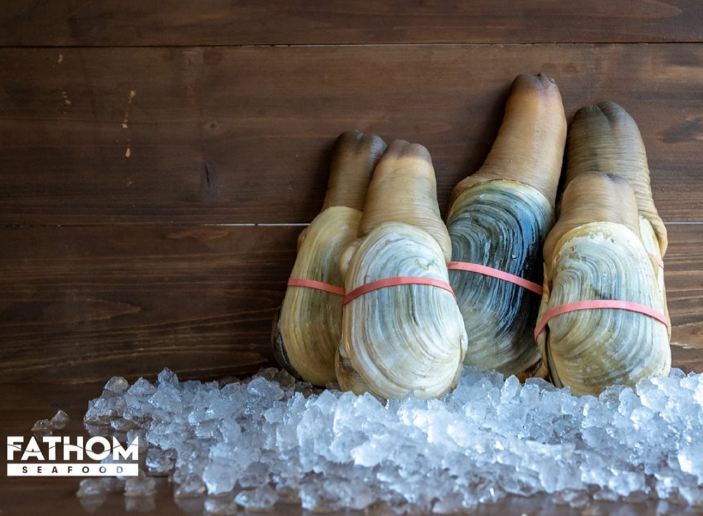 What is Geoduck?