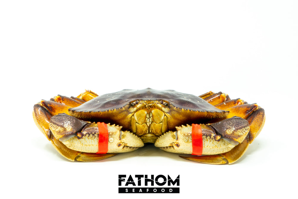 Load image into Gallery viewer, LIVE DUNGENESS CRAB