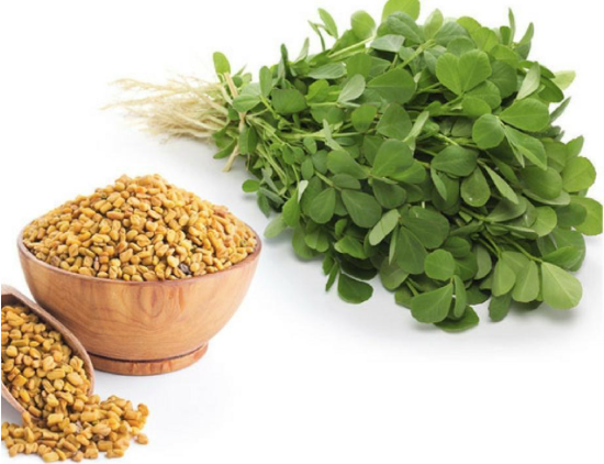 Mothers With Thyroid Issues Should be Cautious in Using Fenugreek as a Lactation Aid