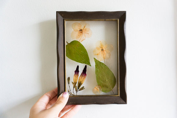 Impatient Morning Glory Pressed Flower Art