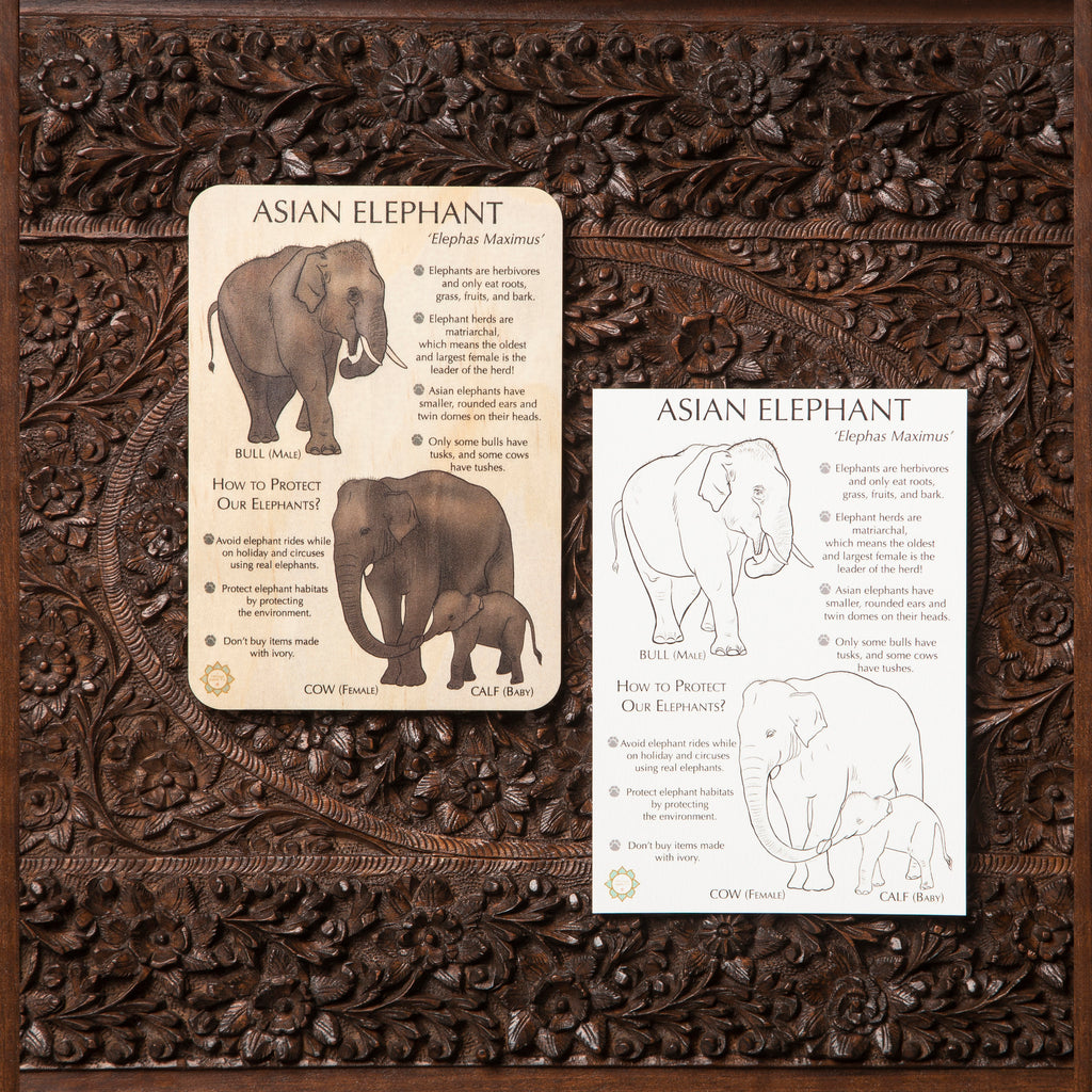 Asian Elephant Fun Facts Timber Tile + Matching Colour In Card