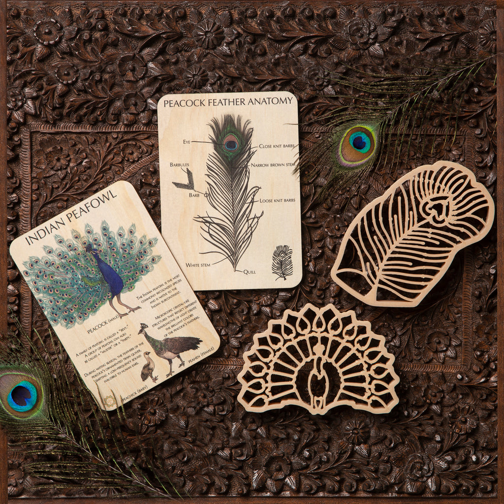 Indian Peacock Sensory Pack - Eco Cutter™ Set of 2, Timber Tile, and Colour In Card