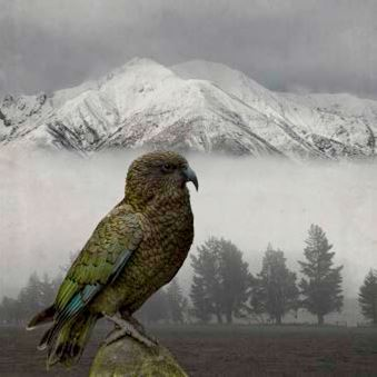 Kea Keeper - Clive Collins