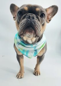 Classic DIY Dog Bandana Kit (Small Dog)